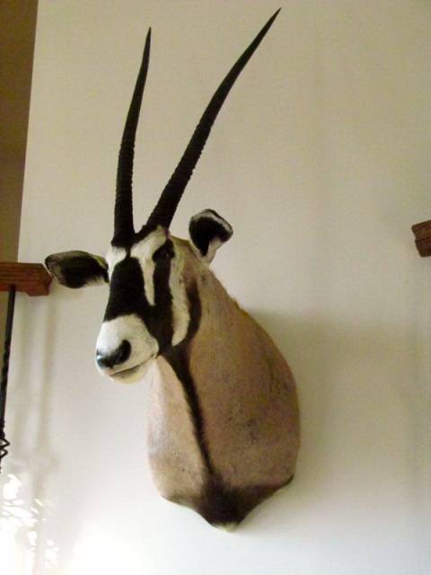 Trophies from your South African Hunting Safari
